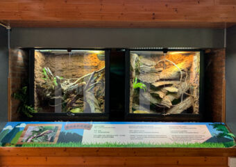 Natural and Agrarian Museum Indoor Species on Glass Doors Macau Lifestyle