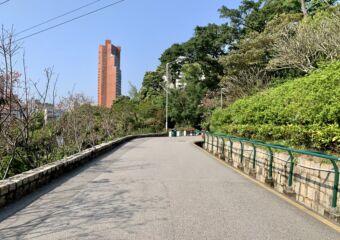 Flora Garden pathway