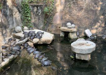 Flora garden turtle pond
