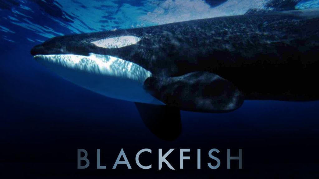 Blackfish netflix