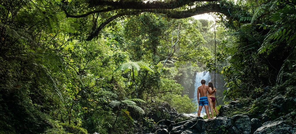 fiji-jungle-1024×465