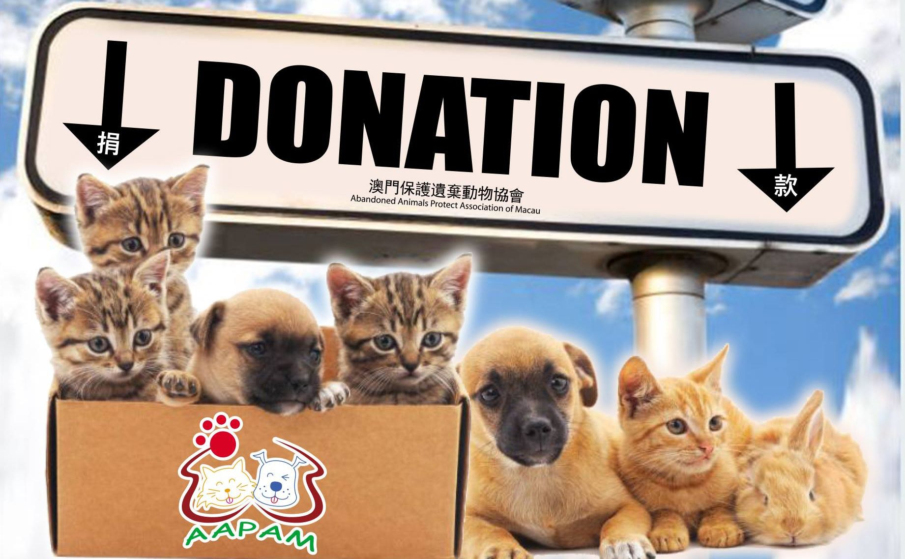 aapam abandoned animals protect association of macau how to help animals in macau lifestyle