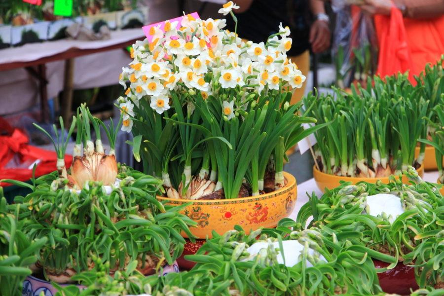 Chinese new year flower market macau lifestyle