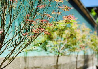Kun Iam Temple Flowers Exterior Close Up
