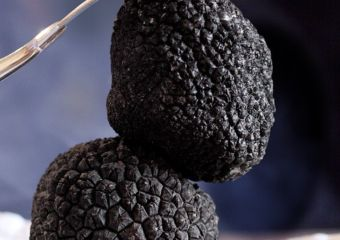 Truffle Stock Photo