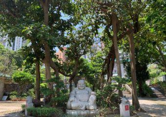buddha trees kun iam temple