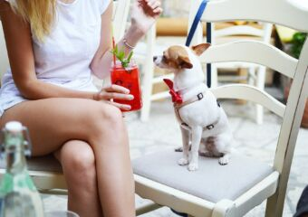 girl with dog and cocktail cafe