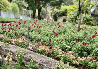 Flora Garden Close Up Flowers Horizontal Macau Lifestyle