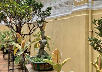 Macau Tea Culture House Bonsais Outdoor Macau Lifestyle