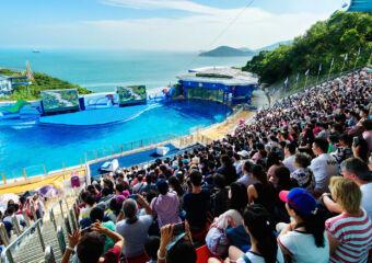 macau day trips ocean park hong kong