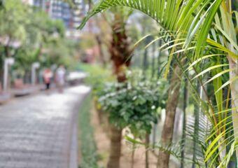 Taipa Central Park Blurred Background Macau Lifestyle
