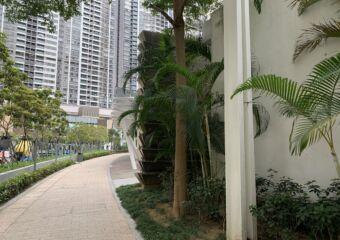 Taipa Central Park Walk Macau Lifestyle