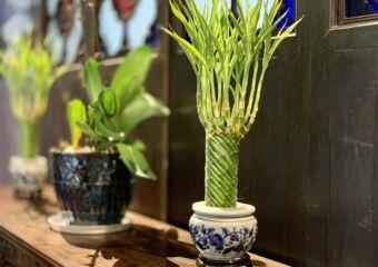 Lou Kau Mansion Flowe Pots Interior Macau Lifestyle