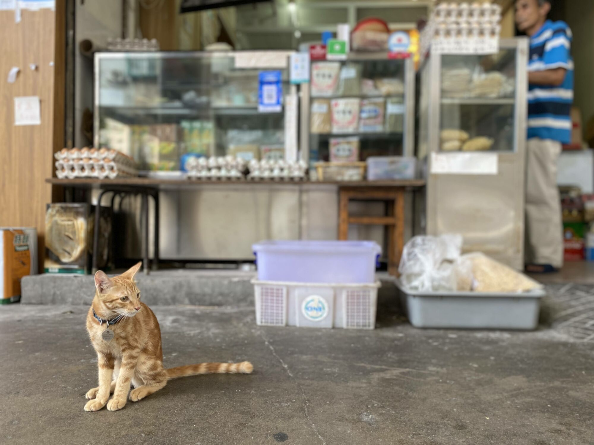 Cheong Kei Cat in front of shop macau lifestyle