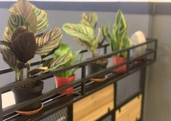 Veggie Restaurant Plants Indoor Macau Lifestyle