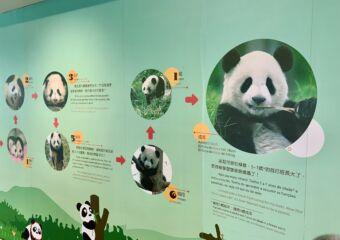 Macau Giant Panda information Centre poster