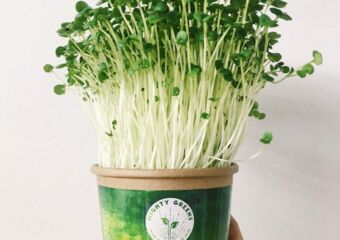 green shiso microgreen from mighty greens