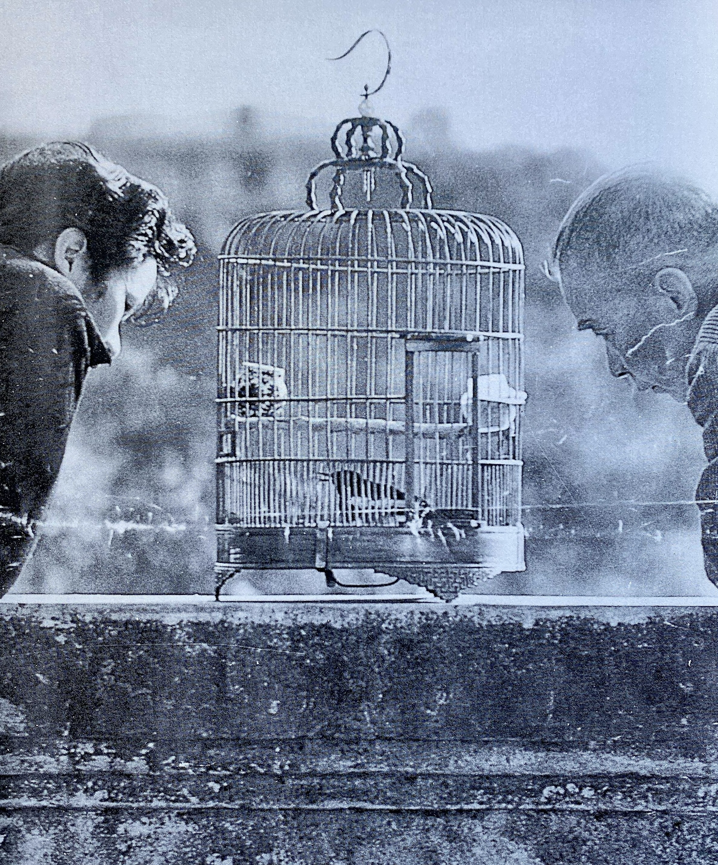 Bird Cages With Men Watching Macau Macao Archives