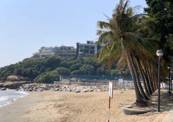 Cheoc Van Beach palm trees