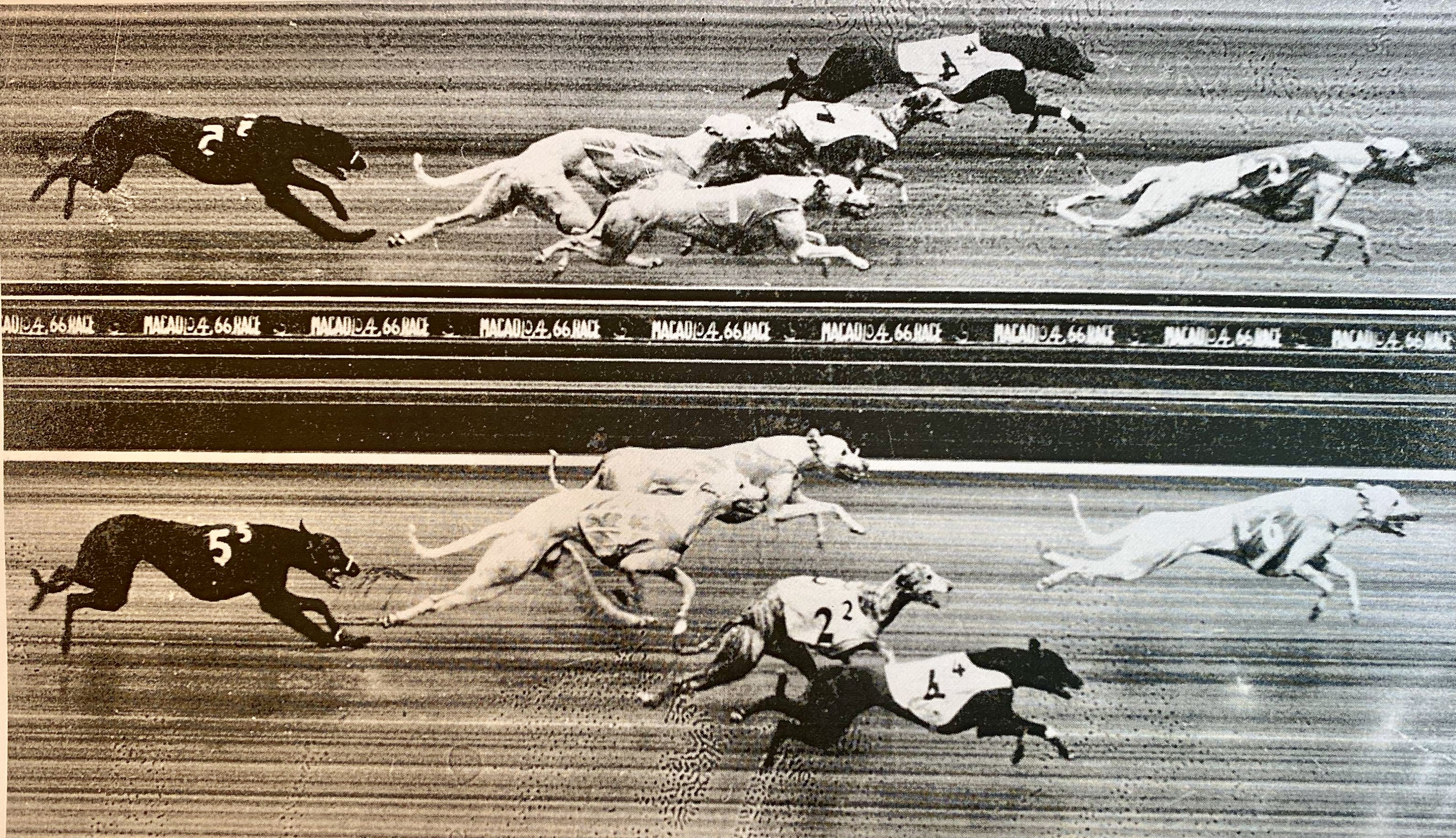 Dogs racing at the Yat Yuen Canidrome